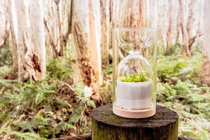 Livesglass