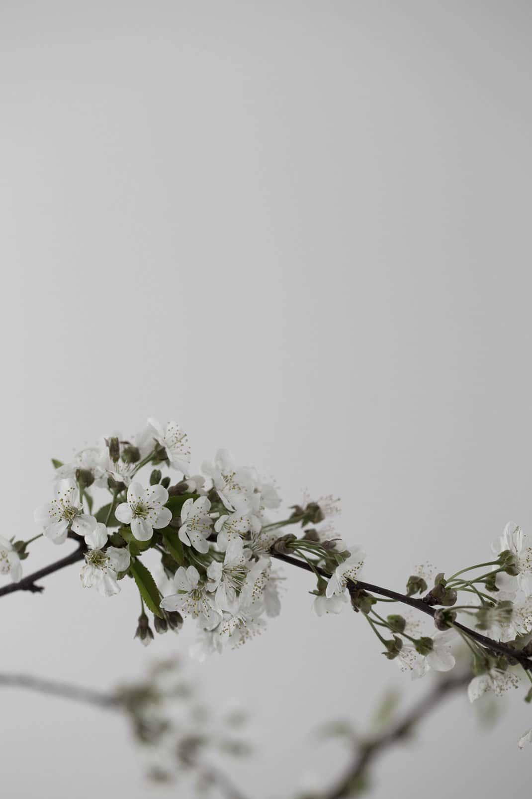 Guillaume Alan nous dévoile un appartement parisien au minimalisme poétique 1