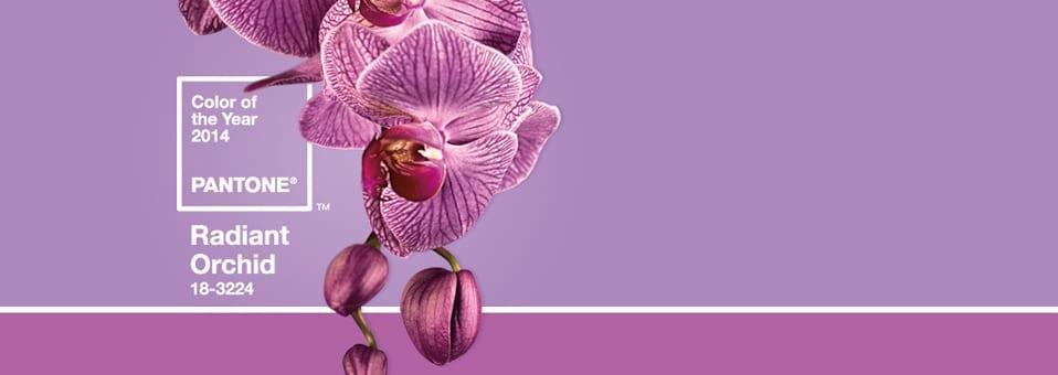 18-3224 Radiant Orchid Couleur année 2014X